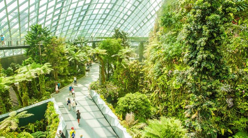 mai-vom-vo-oc-doc-dao-cua-khu-vuon-nhan-tao-gardens-by-the-bay-9